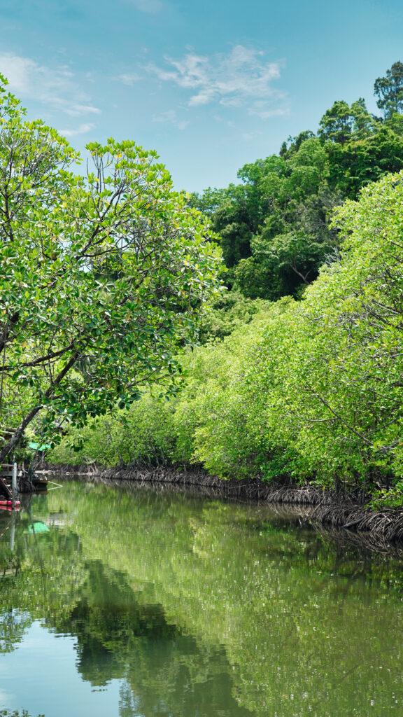 クート島の川